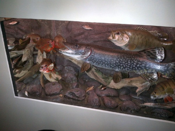 Trophy fish diorama created by Dave Montgomery